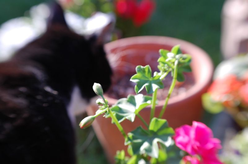 Garden5