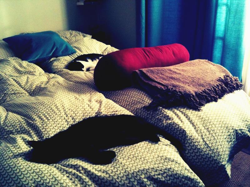 Kitties napping