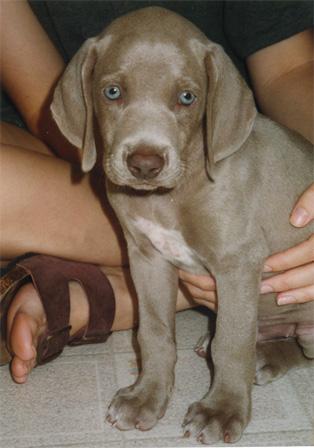 Jackson pup