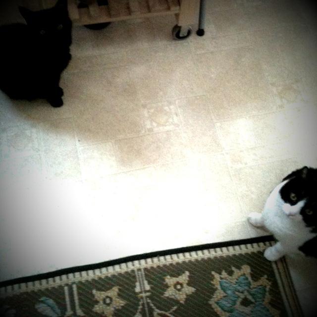 Kitties waiting