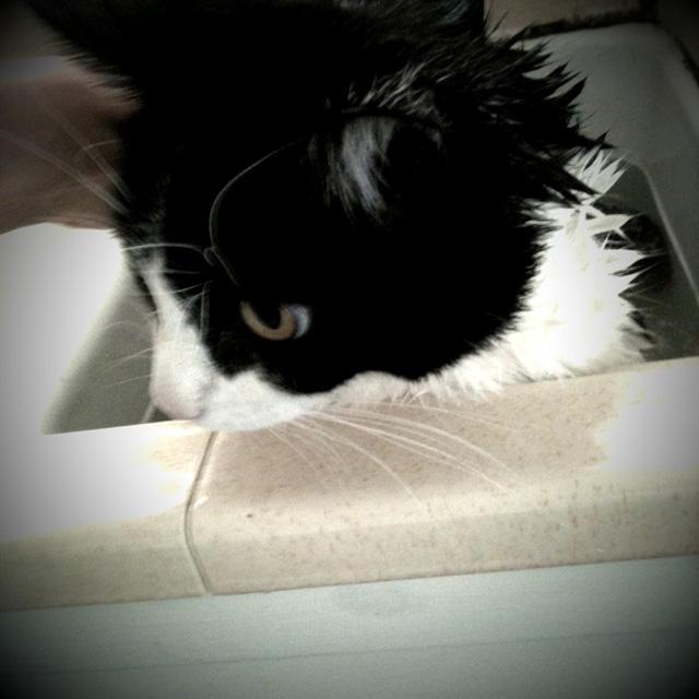 Garbo in bath