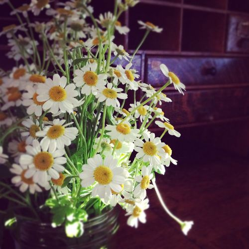 Daisies from ali