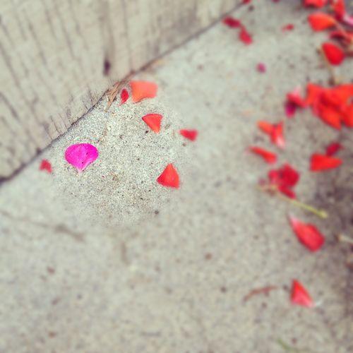 Pretty petals ct