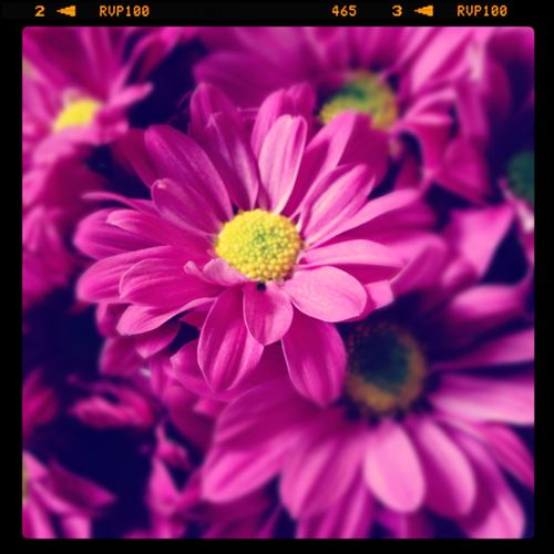 Farmer's market flowers for you