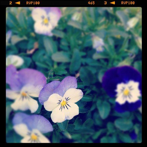Gardening ct