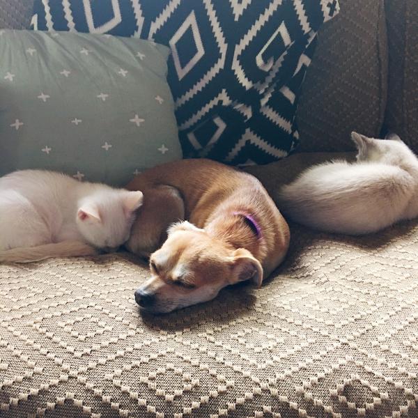 Pepita and kittens IMG_5764