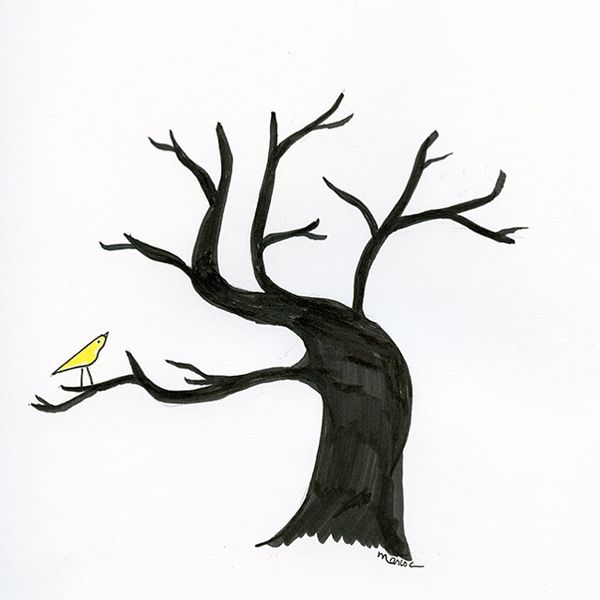 Ct tree IMG_2407